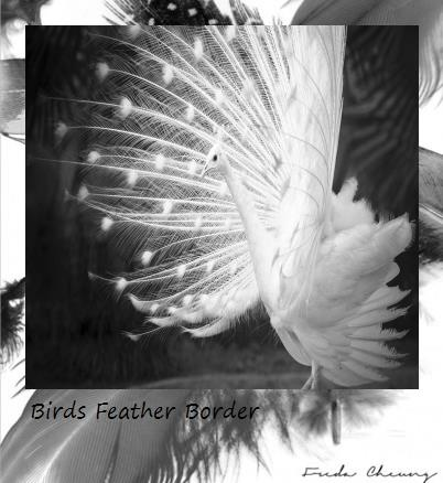 Freda Cheung® Birds feather Polaroid border