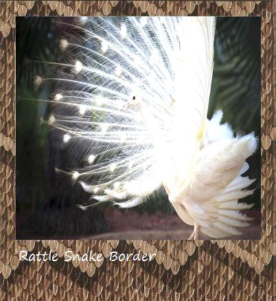 Rattle Snake Polaroid border