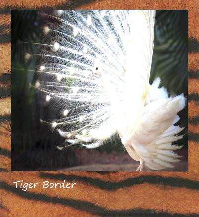 Tiger Polaroid border